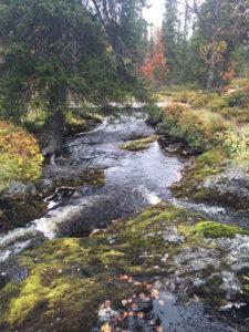 Höstbild från Storhogna. Foto: Cicki Jannesson